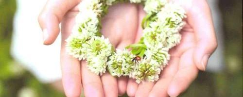 Ladybug Farm by Donna Ball